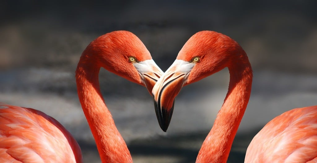 flamingo-love